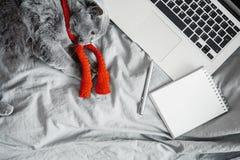 Traurige erschöpfte Katze mit Laptop und leerem Notizblock Beschneidungspfad eingeschlossen Kreative Krise stockfotografie