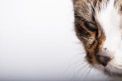 Trauriges Gesicht der Katze Stockfotografie
