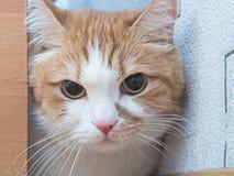 Traurige Katze Stockfotos