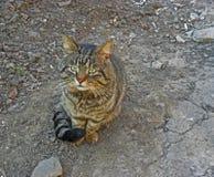 Traurige Katze Stockfoto