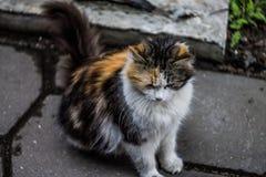 Traurige Katze Lizenzfreie Stockfotos