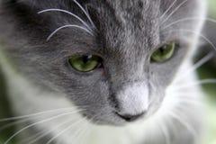 Traurige Katze Lizenzfreie Stockbilder