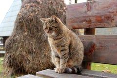 Traurige Katze, die auf einer Holzbank sitzt Lizenzfreie Stockbilder