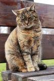Traurige Katze, die auf einer Holzbank sitzt Lizenzfreie Stockfotografie