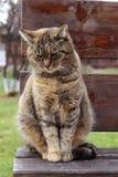 Traurige Katze, die auf einer Holzbank sitzt Stockfotos