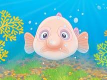Traurige Klecksfische Stockbild