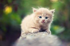 Traurige kleine Miezekatze Stockfoto