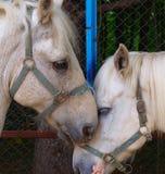 Traurige Pferde lizenzfreies stockbild