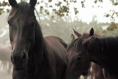 Traurige Pferde Lizenzfreies Stockfoto