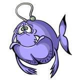 Traurige purpurrote Fische lokalisiert auf weißem Hintergrund Stockbild
