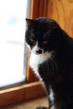 Traurige Schwarzweiss-Katze Stockfotografie
