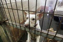 Traurige verlassene Hunde Stockfoto