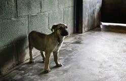 Traurige verlassene Hunde Stockbild