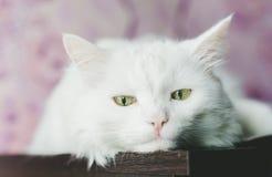 Traurige weiße Katze Stockbild