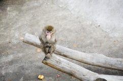 Trauriger Affe Stockfotografie