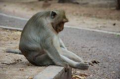 Trauriger Affe, der auf der Seite der Straße sitzt Stockfotografie
