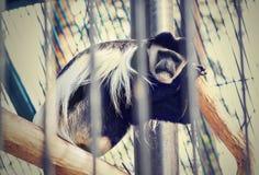 Trauriger Affe, der in einem Käfig mit seinem zurück zu dem Baumast sitzt Lizenzfreies Stockfoto