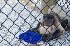 Trauriger Affe in einem Käfig, der ein Spielzeug umarmt Lizenzfreie Stockfotos