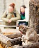 Trauriger Affe in einem Zoo Lizenzfreie Stockfotografie