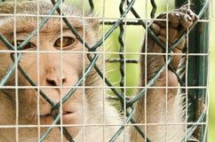 Trauriger Affe eingesperrt Lizenzfreies Stockfoto