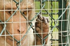 Trauriger Affe eingesperrt Lizenzfreies Stockbild