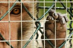 Trauriger Affe eingesperrt Lizenzfreie Stockfotos