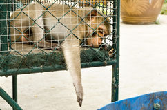 Trauriger Affe eingesperrt Stockfotos