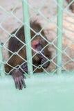 Trauriger Affe gefangen genommen in einem Zoo Stockbild