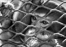 Trauriger Affe im Käfig Stockfotos