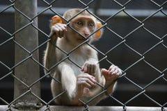 Trauriger Affe im Käfig Stockfotografie