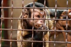 Trauriger Affe im Käfig Lizenzfreies Stockfoto