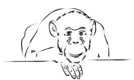 Trauriger Affe setzte ihren Kopf auf eine Tatze Stockbilder