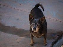 Trauriger alter Hund in der Straße Stockfotografie