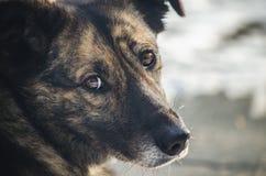 Trauriger Blick eines obdachlosen Hundes Lizenzfreie Stockfotografie