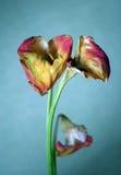 Trauriger Blumenstrauß Lizenzfreies Stockfoto