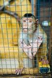 Trauriger flaumiger Affe in einem Käfig sitzt Stockfotos