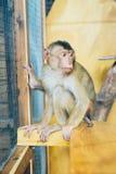 Trauriger flaumiger Affe in einem Käfig sitzt Lizenzfreies Stockbild