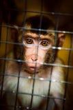 Trauriger flaumiger Affe in einem Käfig sitzt Lizenzfreie Stockfotos