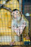 Trauriger flaumiger Affe in einem Käfig sitzt Lizenzfreie Stockbilder