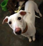Trauriger Hund Stockbilder