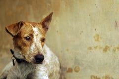 Trauriger Hund Stockbild