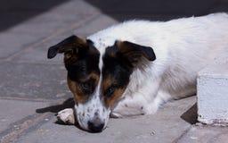 Trauriger Hund Lizenzfreies Stockfoto