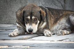 Trauriger Hund Stockfotos