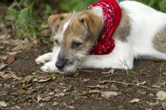 Trauriger Hund lizenzfreies stockbild