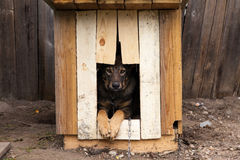 Trauriger Hund Lizenzfreie Stockfotos