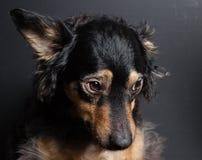 Trauriger Hund Lizenzfreie Stockfotografie