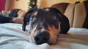 Trauriger Hund Stockfotografie