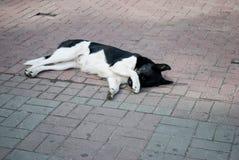 Trauriger Hund, der auf dem Grund-/schockierenden Gesicht des Obdachlosen liegt, wenn Weg-Durchlaufstein-Pflasterung Hunde der gr Lizenzfreie Stockfotografie