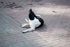 Trauriger Hund, der auf dem Grund-/schockierenden Gesicht des Obdachlosen liegt, wenn Weg-Durchlaufstein-Pflasterung Hunde der gr Stockfoto