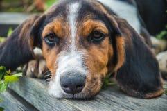 Trauriger Hund, der auf der Brücke liegt Stockfotos